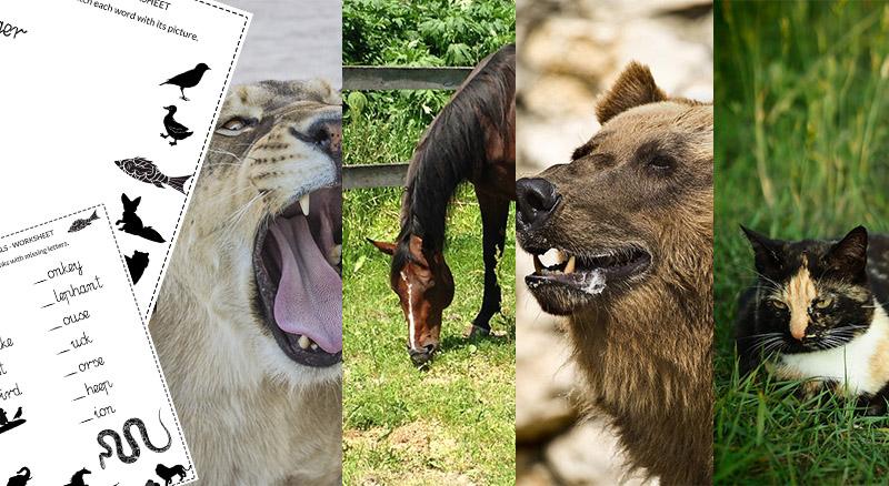 angielski słówka zwierzęta